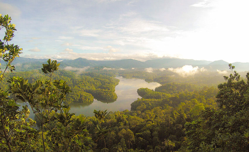 A beatiful picture of a river amongst dense rainforest
